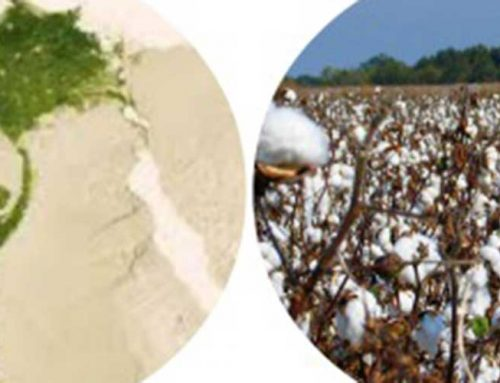 ¿Sábanas de algodón egipcio o de algodón peruano?