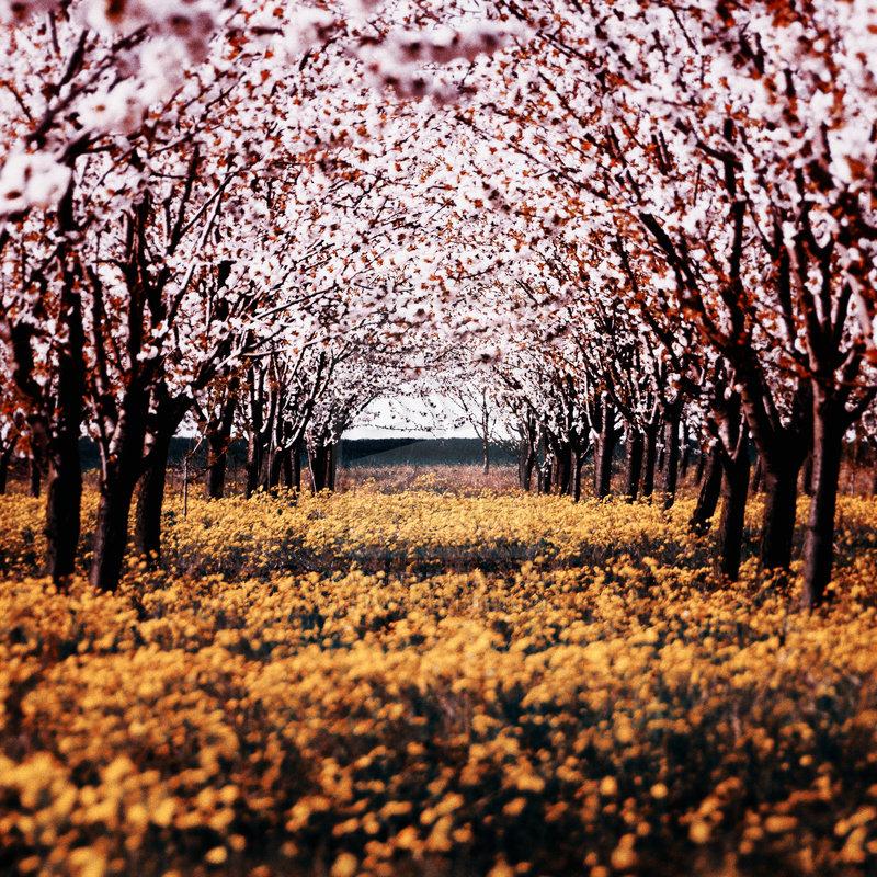 spring_by_f_f_w_d-d1c12x5
